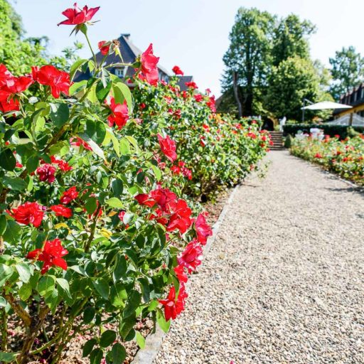 as-a-weddingplanner-in-castle-bollschweil-and-dialekt-in-merdingen17