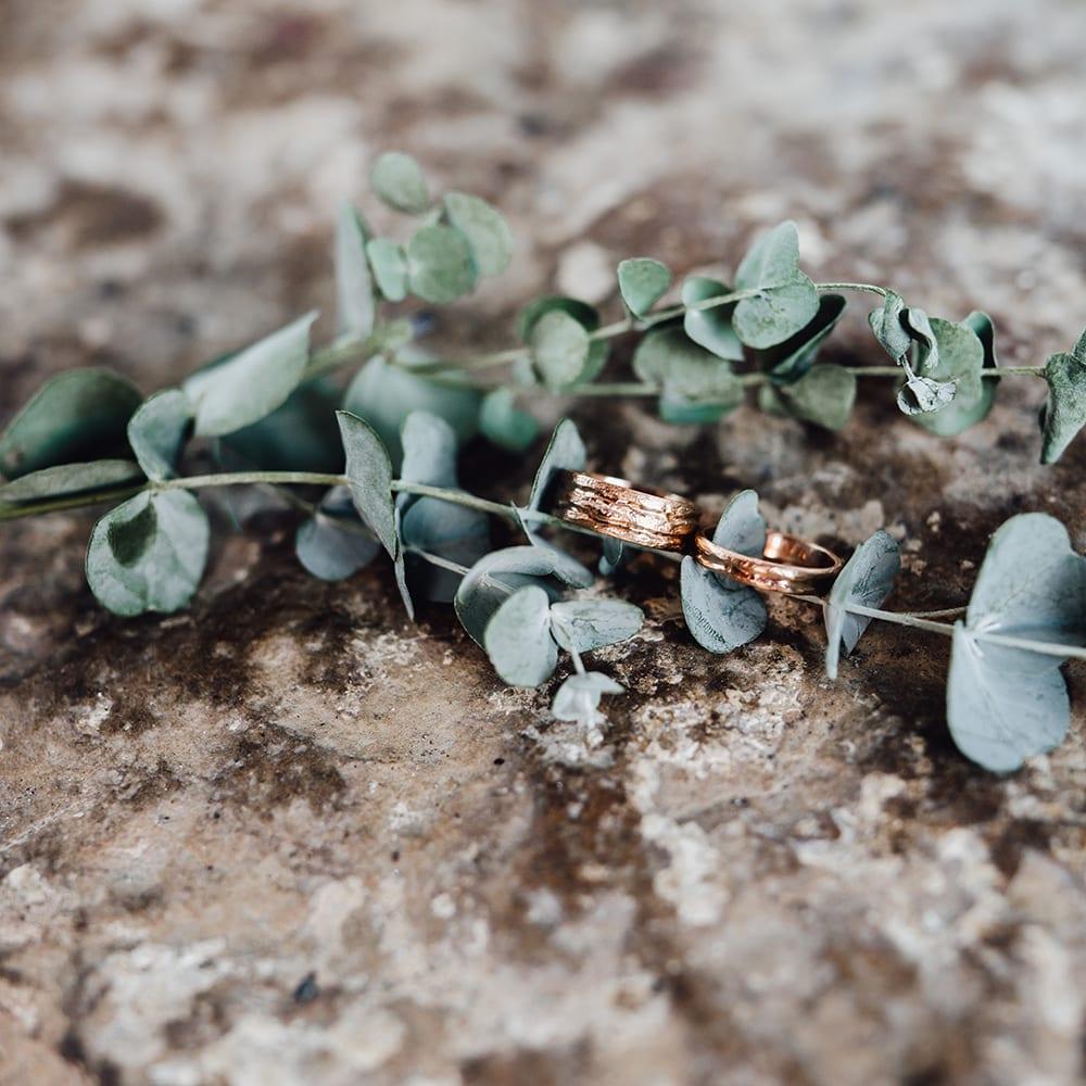 Die Ringe, angeordnet auf einem kleinen, grünen Zweig.